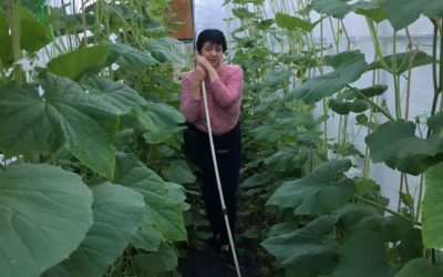 Как растет декоративная тыква